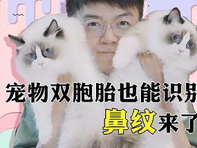 中国推出鼻纹识别宠物健康保险计划
